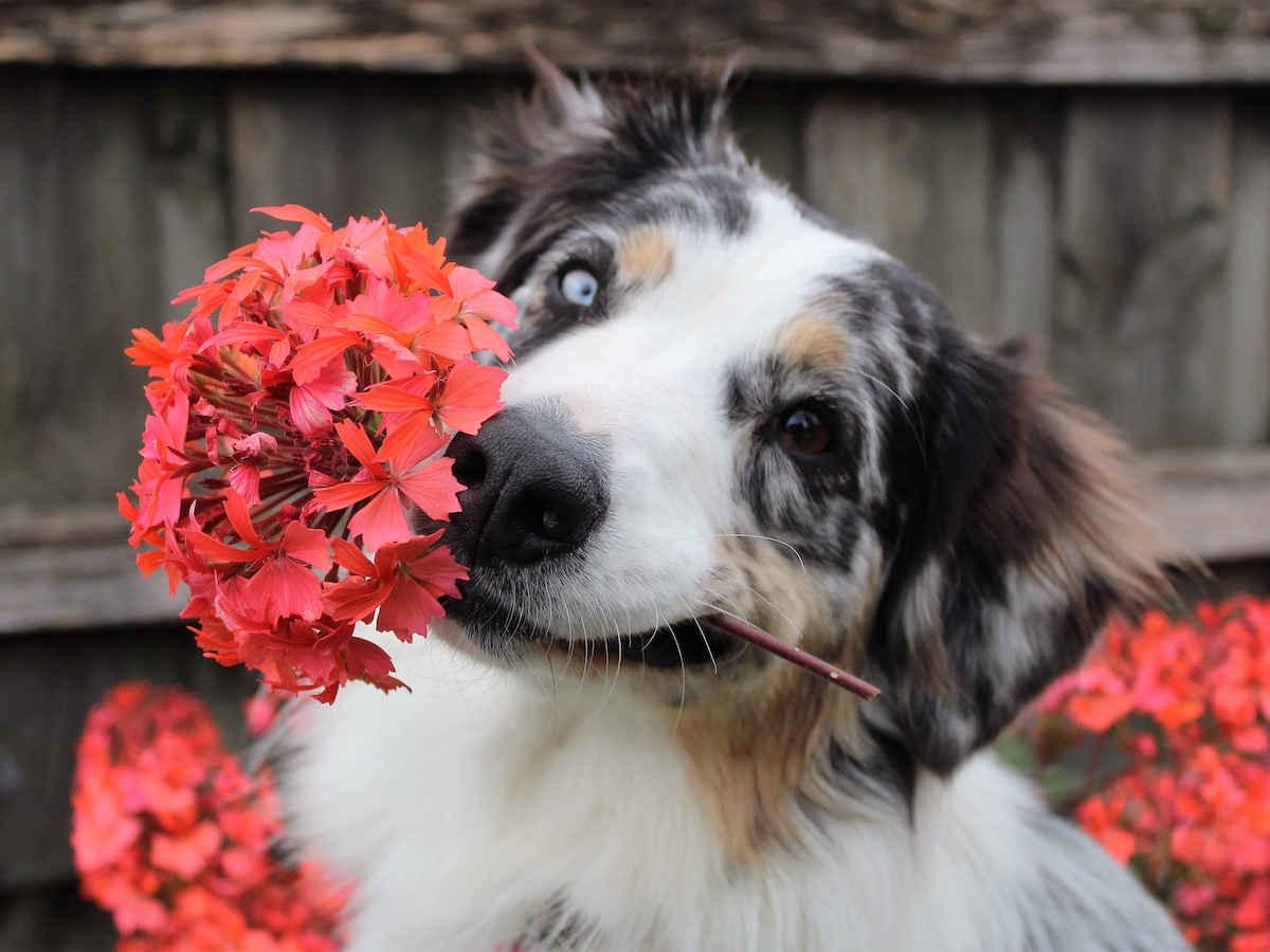 Corso Online Certificato di Floriterapia per Animali